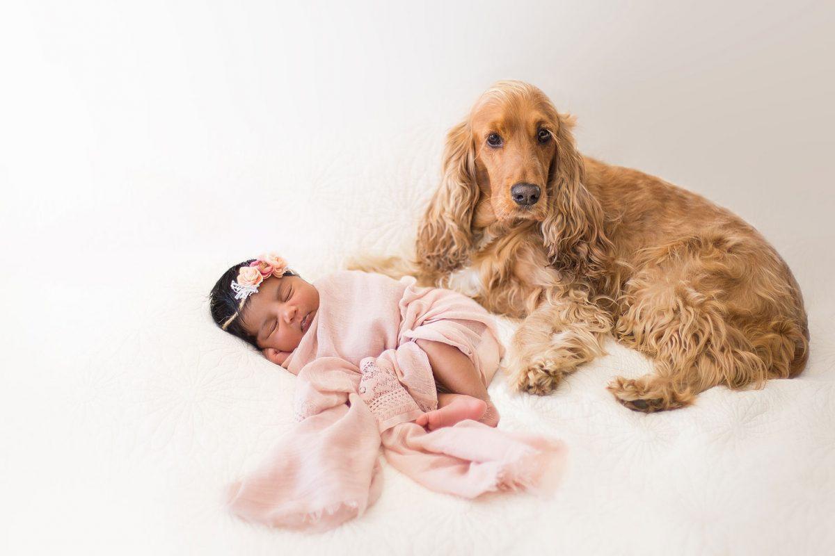 newborn_shoot_madison_banner