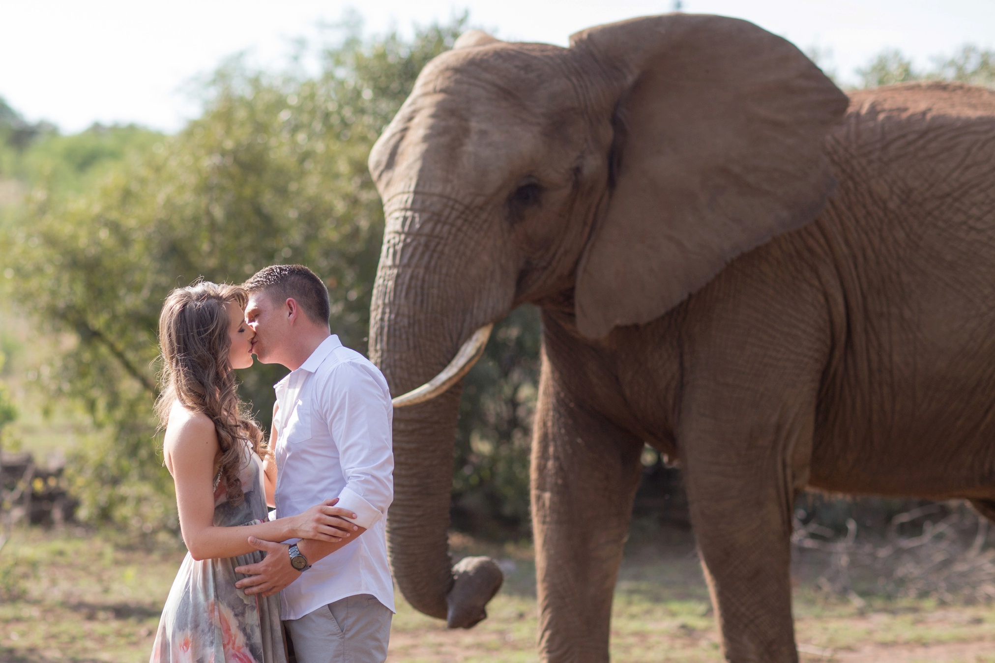 Glen_Afric_Kyle_and_Lindsay_engagement_elephants_safari_2