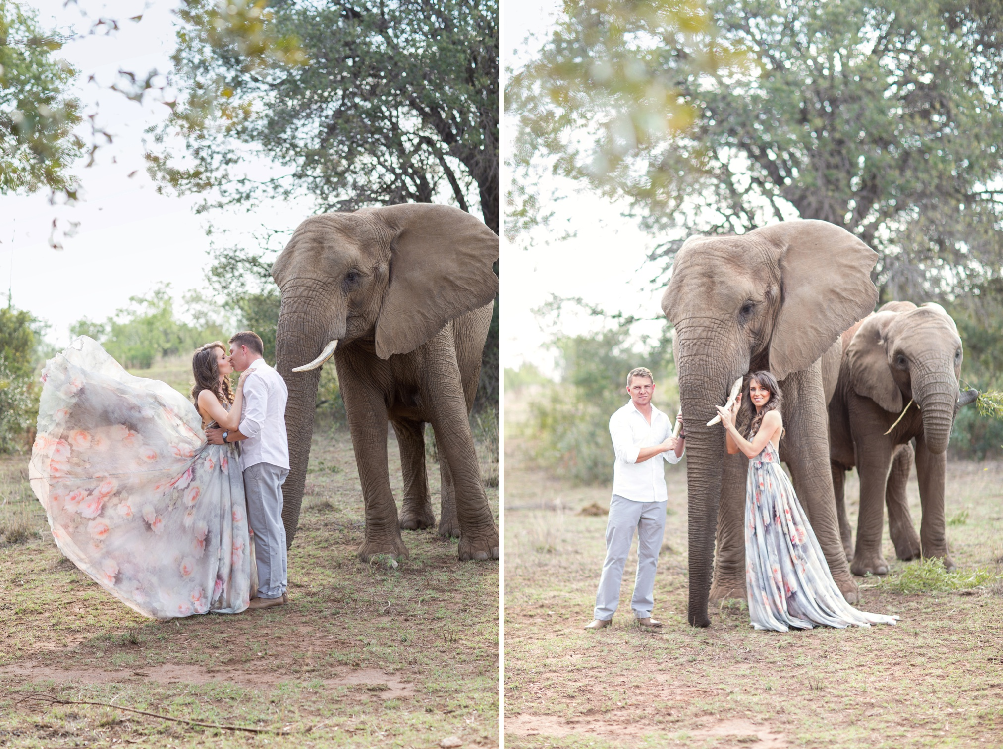 Glen_Afric_Kyle_and_Lindsay_engagement_elephants_safari_6