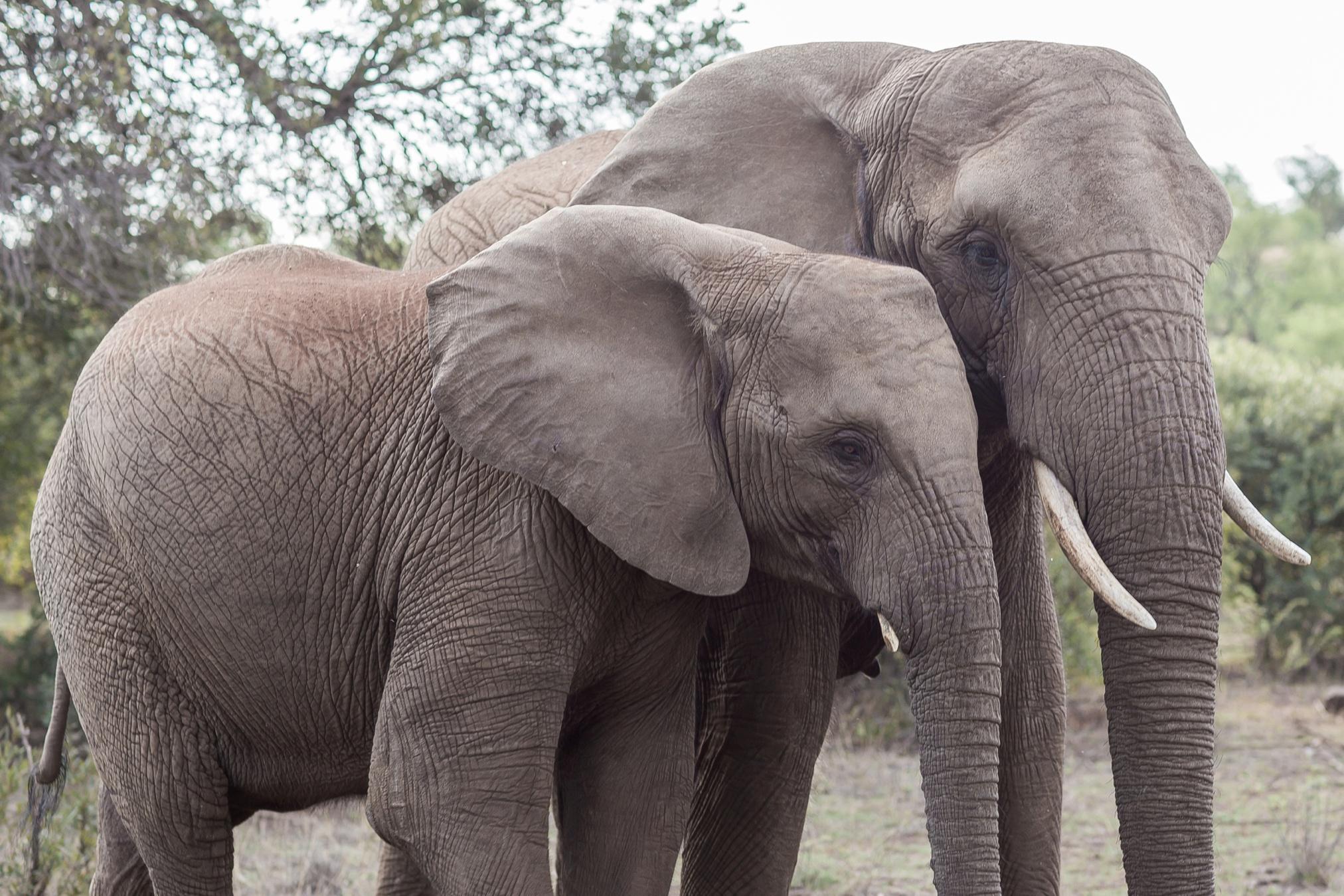 Glen_Afric_Kyle_and_Lindsay_engagement_elephants_safari_7