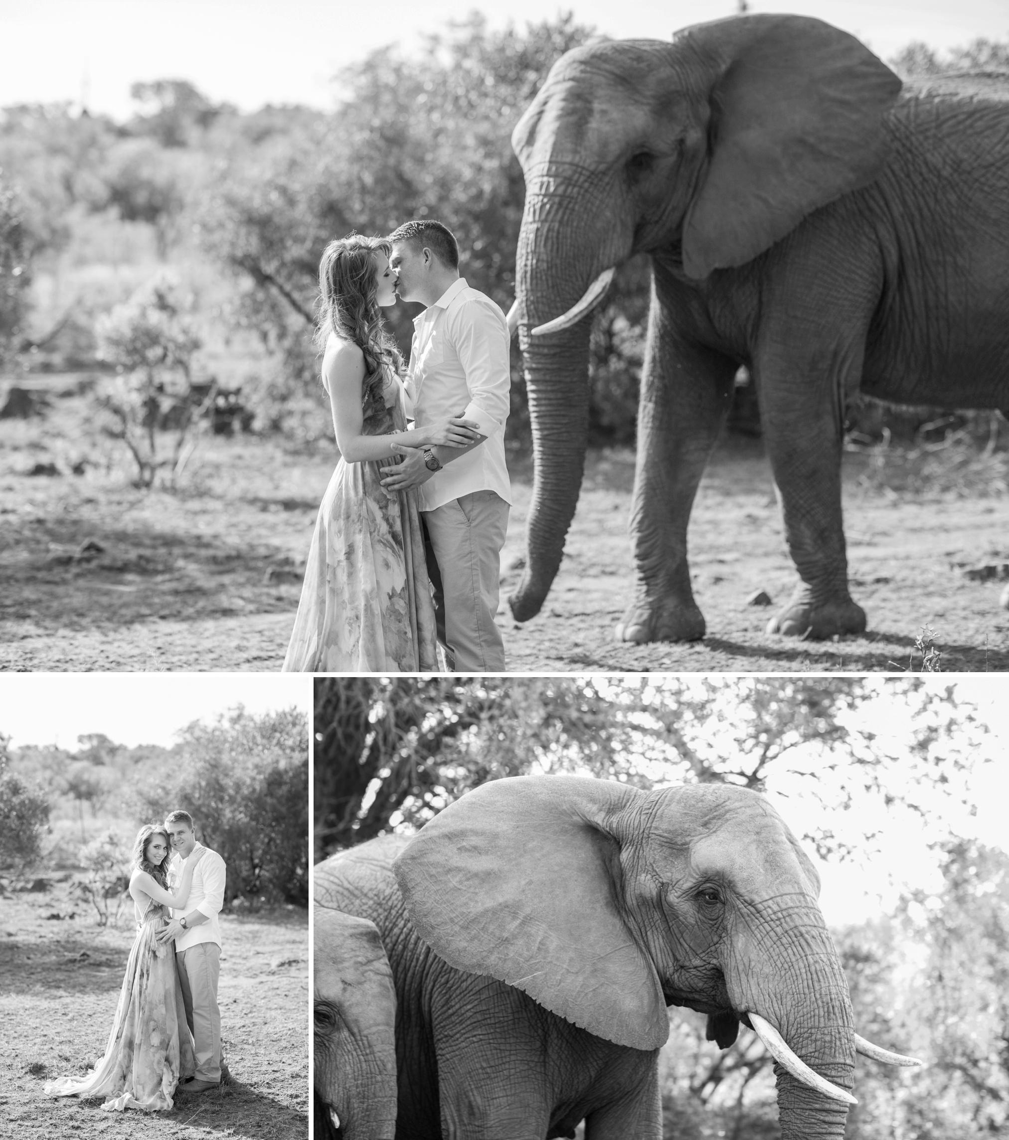 Glen_Afric_Kyle_and_Lindsay_engagement_elephants_safari_8