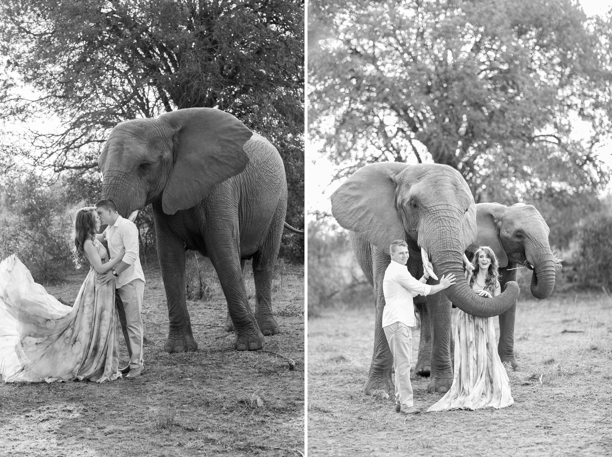 Glen_Afric_Kyle_and_Lindsay_engagement_elephants_safari_9